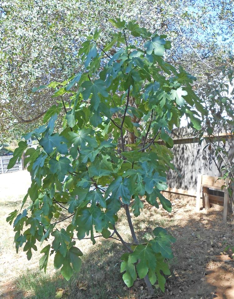Cuando & amp; Cómo fertilizar sus árboles frutales | Blog de Jardinería Orgánica