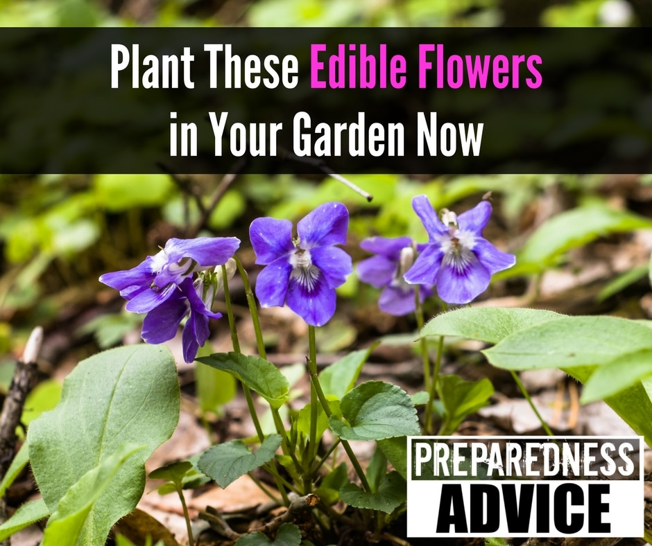 Plant These Edible Flowers in Your Garden Now
