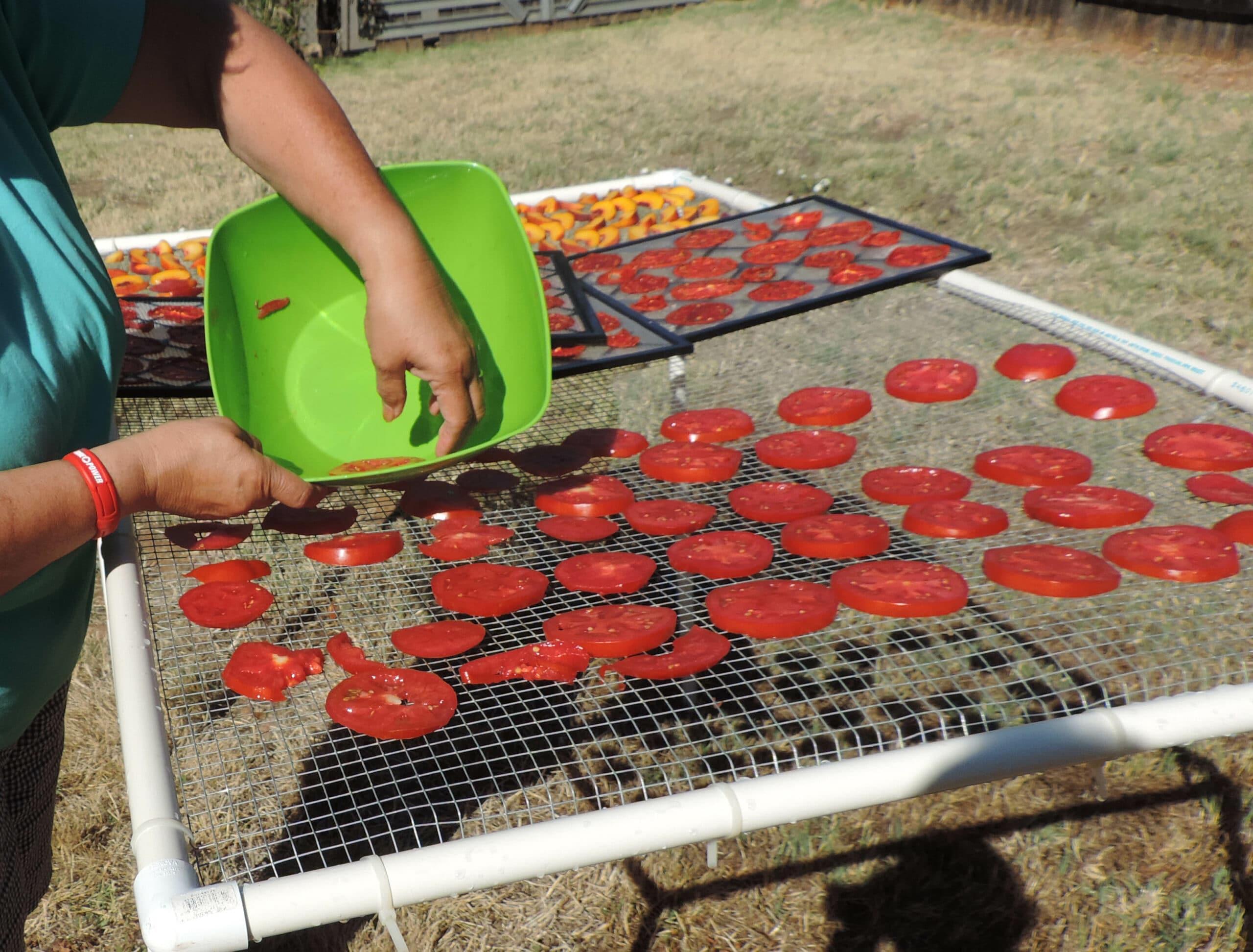 drying tomatoes outdoors preparedness advicepreparedness advice