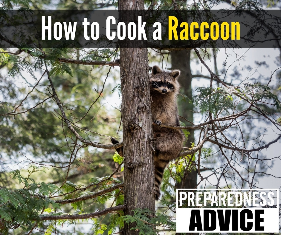 How to Cook a Raccoon via Preparedness Advice