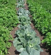rotating crops