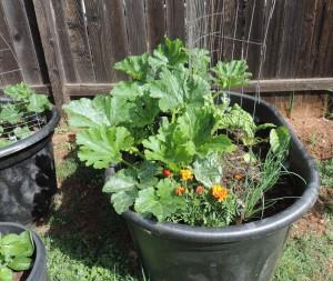 raised planters