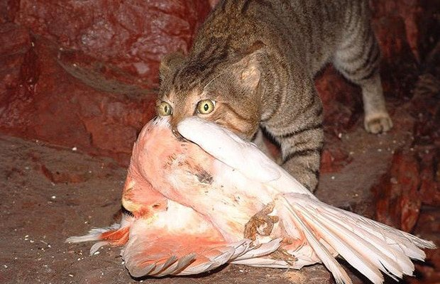 Feral Cat Food Web