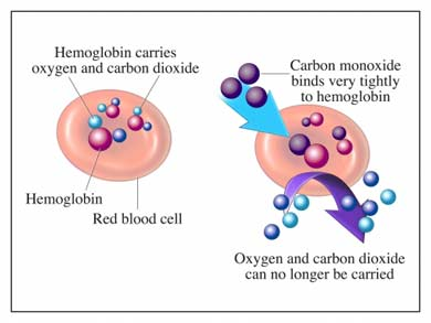 how does carbon monoxide disrupt the process of oxygen transport I transport of oxygen: the exchange of oxygen and carbon dioxide takes place in between the lungs and blood the greater part of oxygen diffuses into the blood and at the same time, carbon dioxide diffuses out.