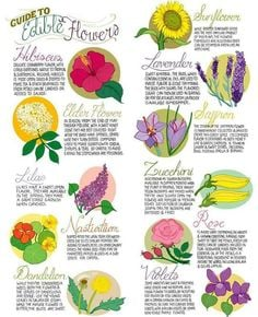 Image result for edible flower photos