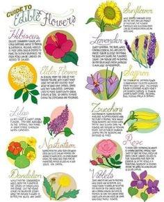 82 Common Edible Flowers Preparedness Advicepreparedness