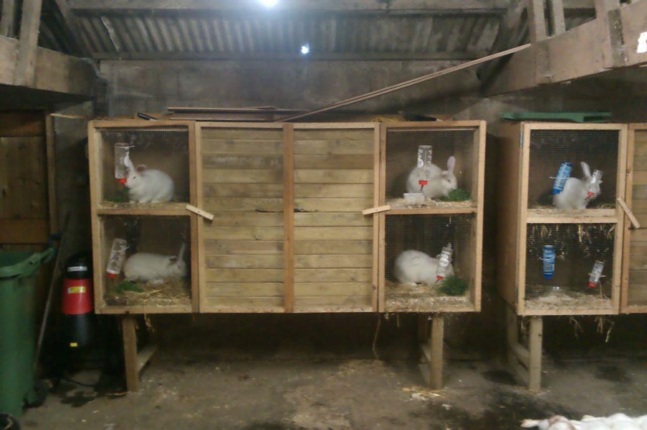 breeding rabbits to supplement your food storagepreparedness advice