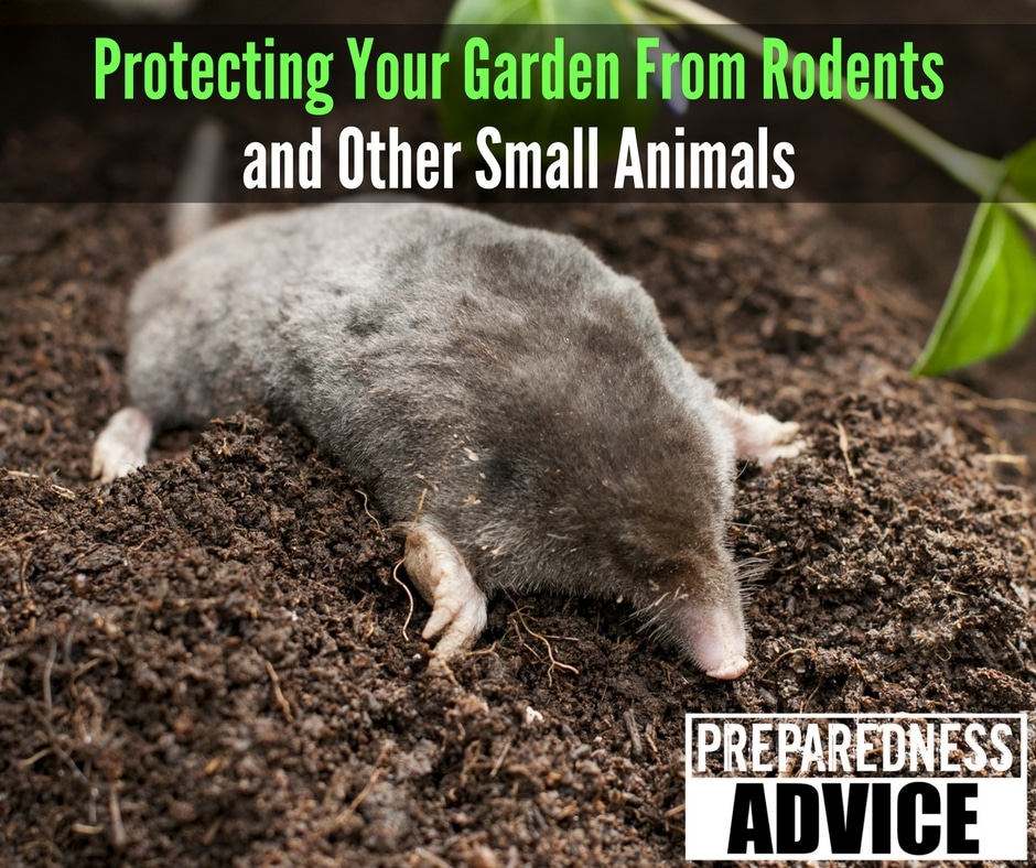 Protecting Your Garden From Rodents and Other Small Animals via Preparedness Advice