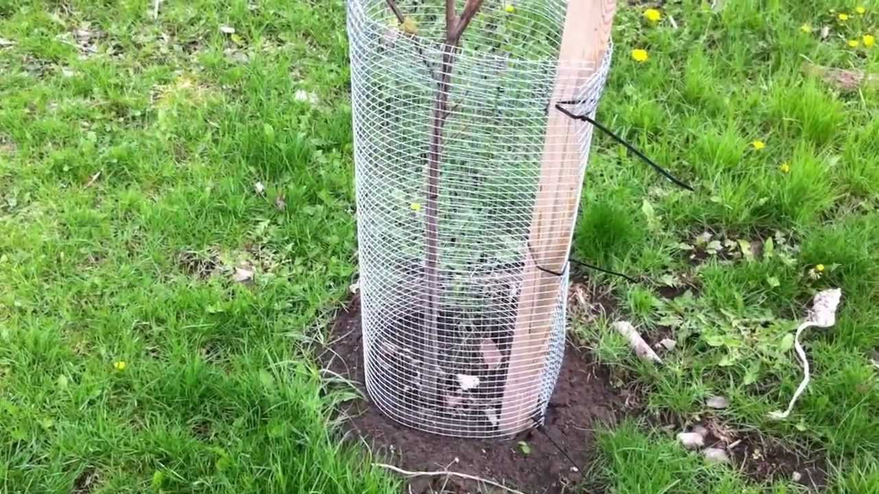 How to protect your garden from rodents other small for How to protect your garden from animals