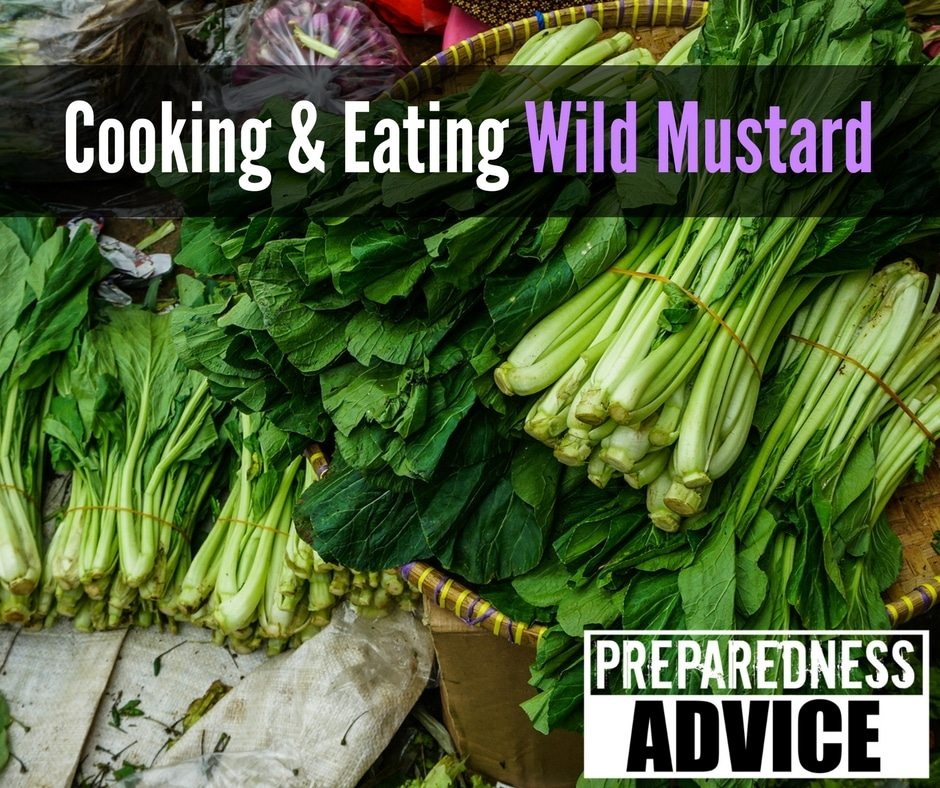cooking eating wild mustard via preparedness advice